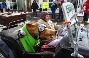 West Dennis -03/10/12- During the annual St. Patrick's Day parade, Seamus Healy from West Dennis drives an antique MG down Main Street with a real stuffed wild boar in the front seat.
