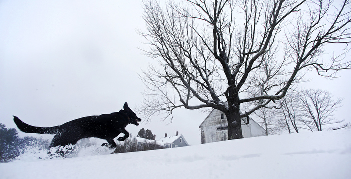 Luna, a black Lab mix, frolics in fresh snow in East Derry, New Hampshire. The southern N.H. area received about eight inches of snow from the winter storm.