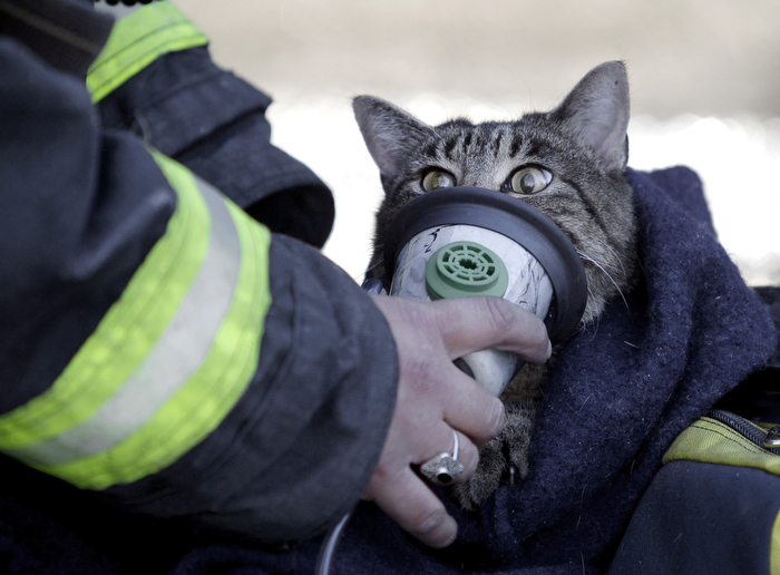 North Andover firefighter Liz Iminski gives oxygen to a cat named Moosha rescued from a house fire in North Andover.