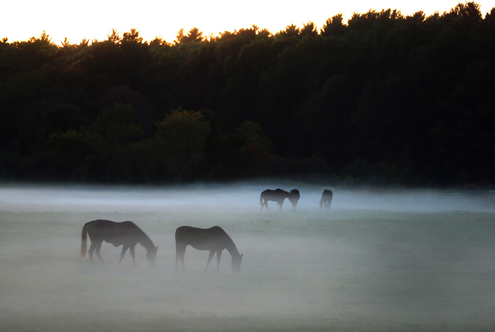 Pembroke-09/28/13 - Fog shrouds grazing horses at dusk at a  farm on Washington Street.