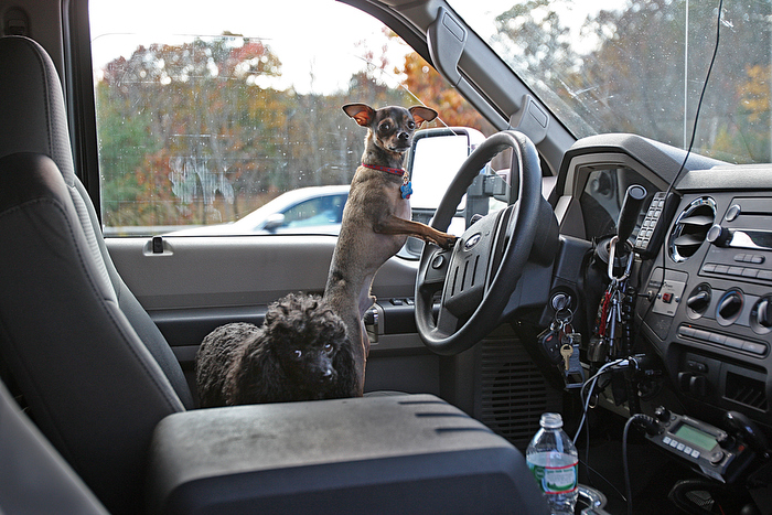 Buddy the Chihuahua and Princess the Poodle were riding in a tractor trailer with their owners when if chrased on the exit ramp to the Mass Pike in Hopkinton. Princess escaped the crushed cab and ran into traffic where good samaritans and an off-duty state trooper safed her from a bad ending. Trooper Eric Gahagan carried the trapped Chihuahua from the wreck to the safety of his vehicle. He took them home for the night.