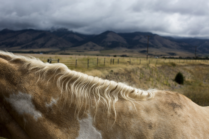 A horse stands in a field outside Belgrade, Montana, USA.