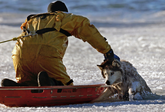 January 9, 2014-Boston,MA. Boston firefighter Sean Coyle uses a basket to slide out to Sylvie, a 13 year old Husky, who fell through the ice at Castle Island's Pleasure Bay in South Boston this morning. Sylvie, who was stuck for 30 minutes, walked her way off the ice after being freed.