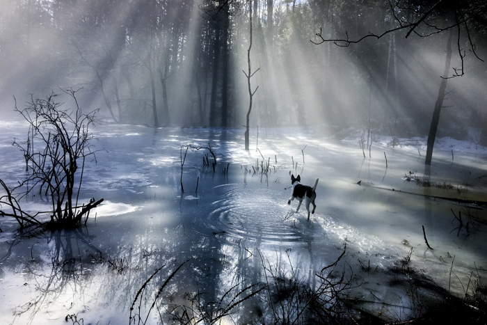 Early morning rays of light, accentuated by fog rising from melting ice, shines down on a dog fetching a stick.